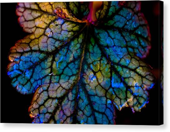 Abstract Leaf Canvas Print