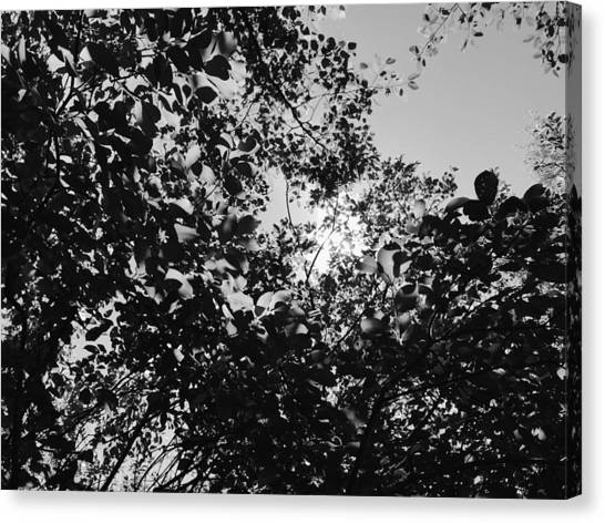 Canvas Print featuring the photograph Abstract Leaves Sun Sky by Chriss Pagani
