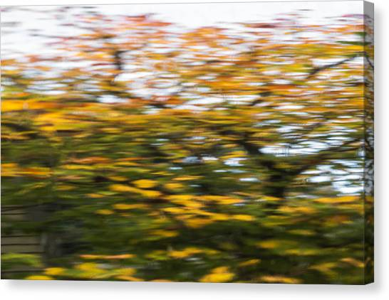 Abstract Of Maple Tree Canvas Print