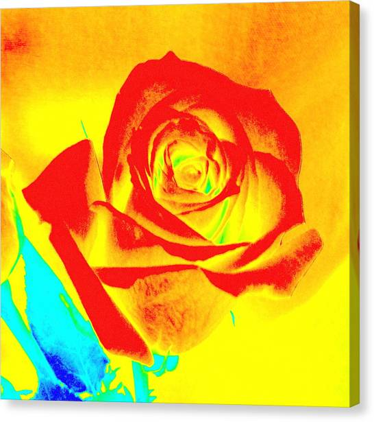 Single Orange Rose Abstract Canvas Print