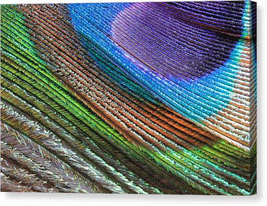 Abstract Peacock Feather Canvas Print