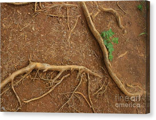 Abstract Roots Canvas Print