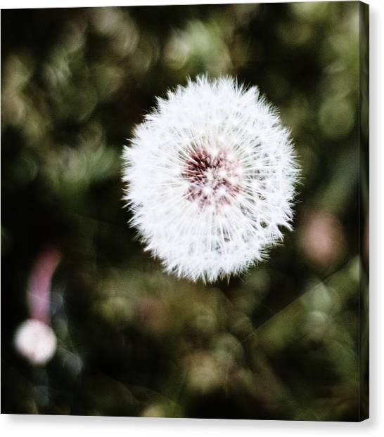 Abstract Seedhead - April 2014 Canvas Print
