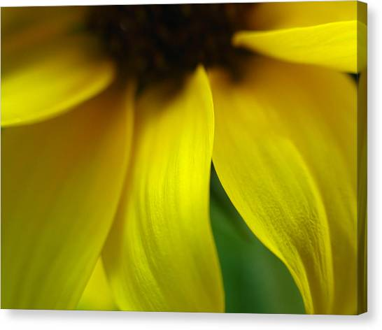 Abstract Sunflower Canvas Print by Juergen Roth