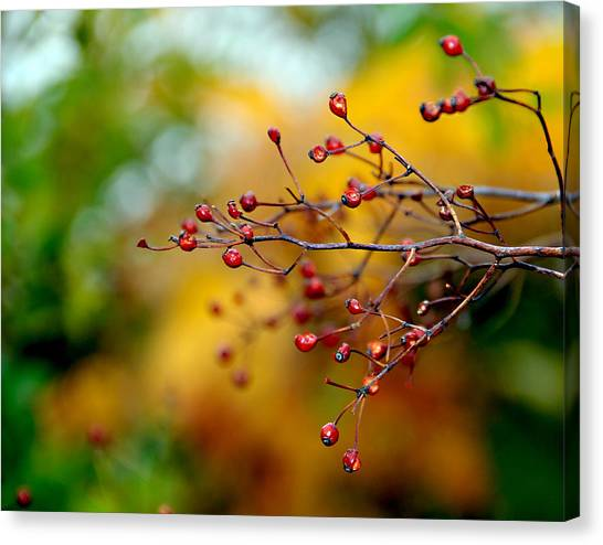 Abstract Tree Branch Canvas Print by JoAnn Lense