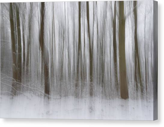 Nottinghamshire Canvas Print - Winter Forest by Chris Dale