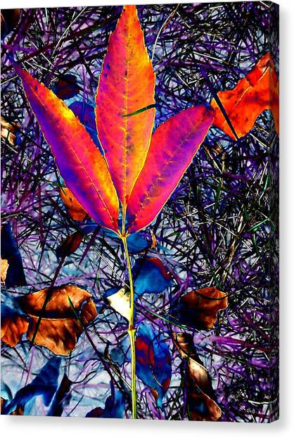 Abstracted Fall Leaves Canvas Print by Beth Akerman
