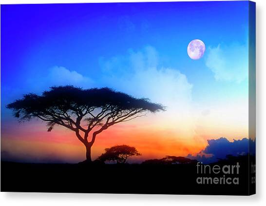 Acacia Sunset Canvas Print