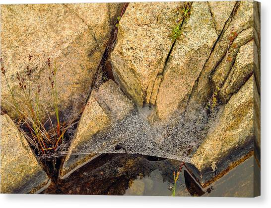 Acadia Granite With Spiderweb And Grasshopper Photo Canvas Print by Peter J Sucy