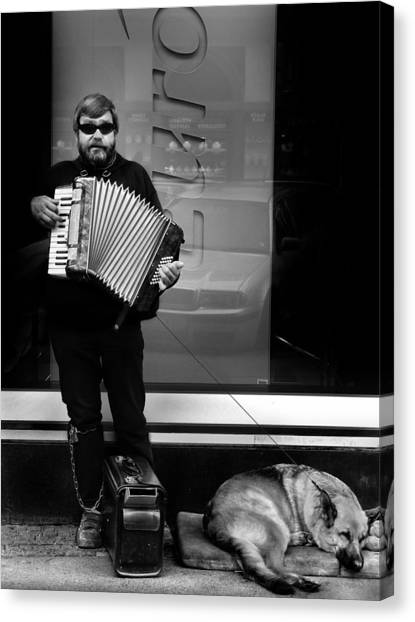 Accordian Player Canvas Print by Todd Fox