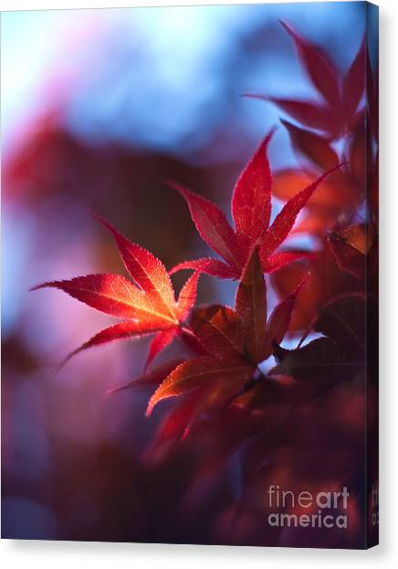 Ace Canvas Print - Acer Kaleidoscope by Mike Reid