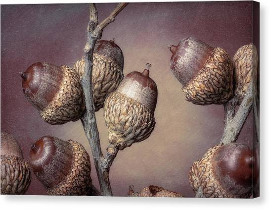 Oak Trees Canvas Print - Acorn Branch by Tom Mc Nemar