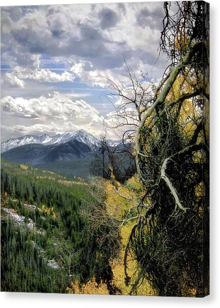 Acorn Creek Trail Canvas Print