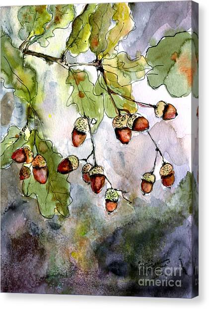 Ginette Canvas Print - Acorns  by Ginette Callaway