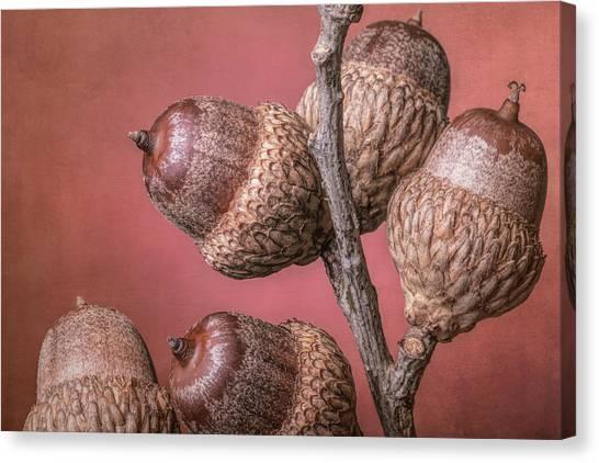 Fruit Trees Canvas Print - Acorns by Tom Mc Nemar