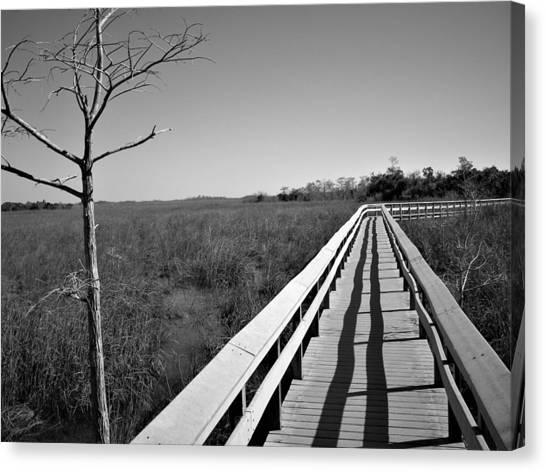 Across The Swamp Canvas Print