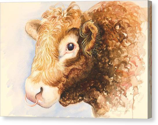 Brown Cow Canvas Print - Adam The Bull by Alison Cooper