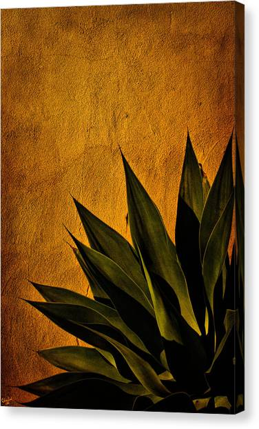 Adobe And Agave At Sundown Canvas Print