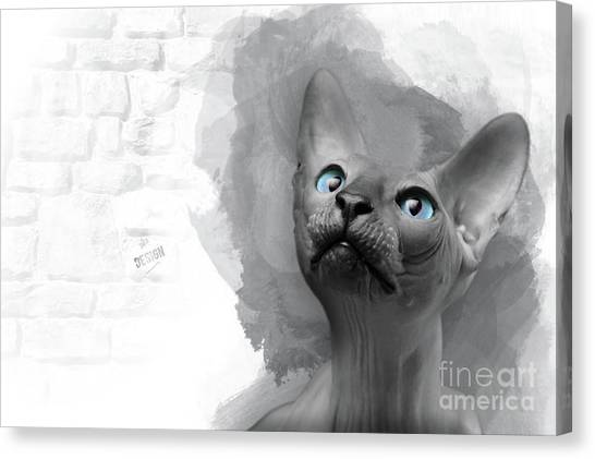 Sphynx Cats Canvas Print - Adorable Gray Blue-eyed Sphynx Looking Up by Maria Astedt