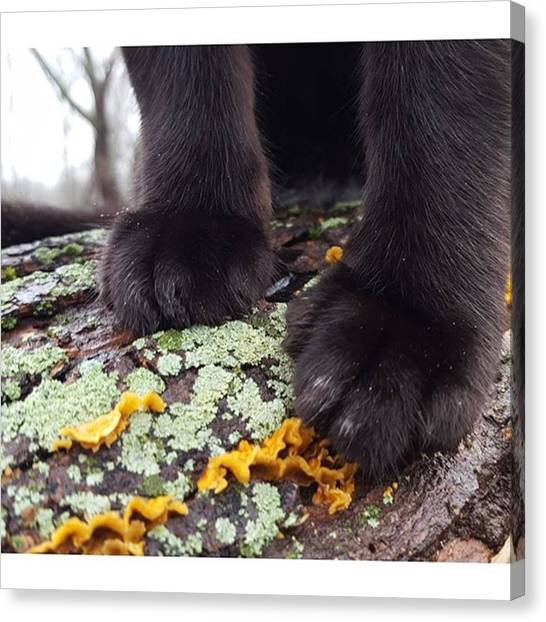 Panthers Canvas Print - Adventure Cat Paws. ​#cat by Sirius Black Adventure Cat
