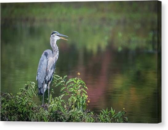 Advice From A Great Blue Heron Canvas Print