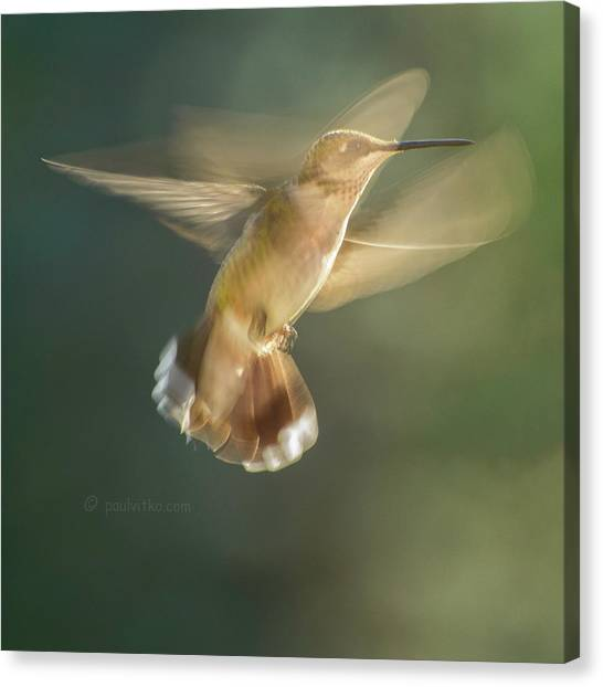 Aerial Dancing.... Canvas Print