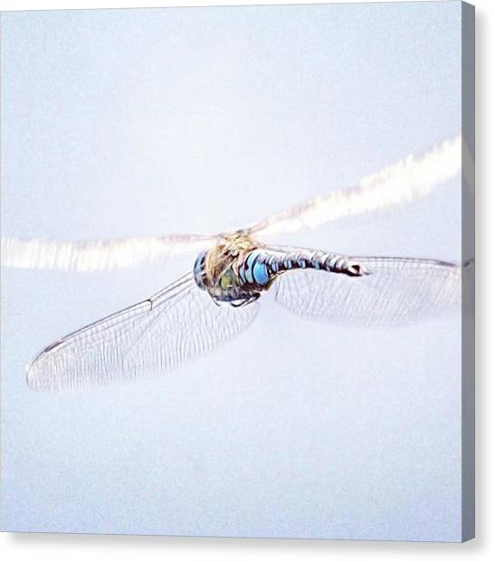 Animal Canvas Print - Aeshna Juncea - Common Hawker In by John Edwards