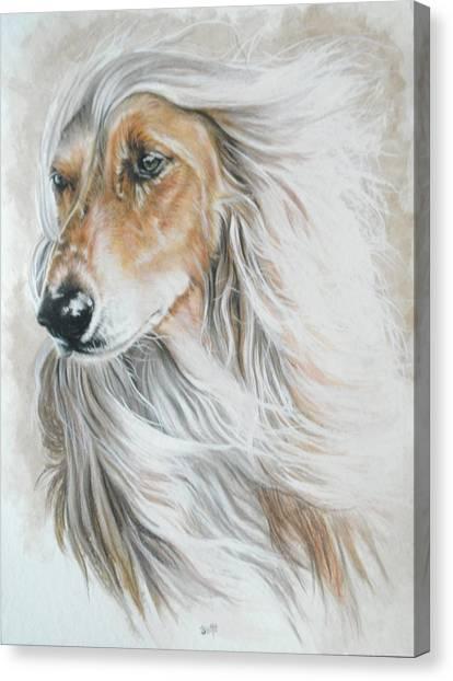 Canvas Print - Afghan Hound by Barbara Keith