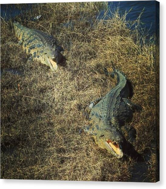 Jaws Canvas Print - #africa #adventures #crocodiles by Mark Nowoslawski