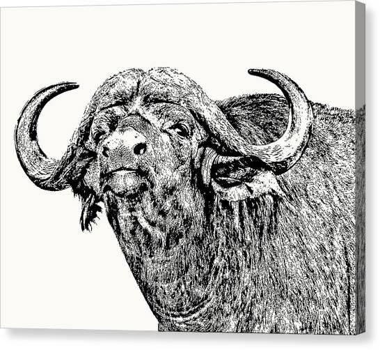 African Buffalo Bull Portrait Canvas Print