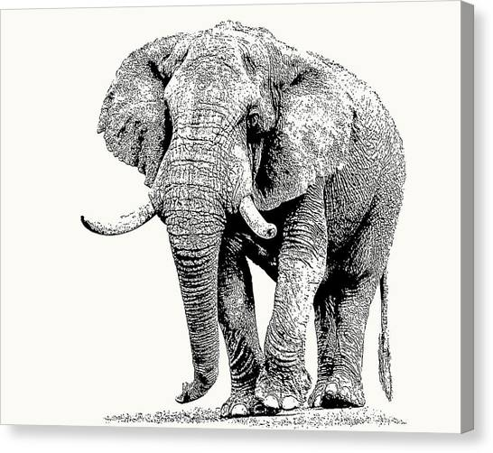 African Bull Elephant With Fine Tusks Canvas Print