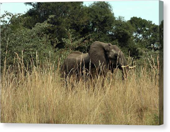 African Elephant In Tall Grass Canvas Print