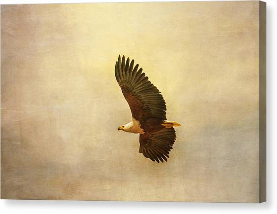 African Fish Eagle Canvas Print