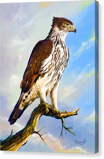 African Hawk Eagle Canvas Print