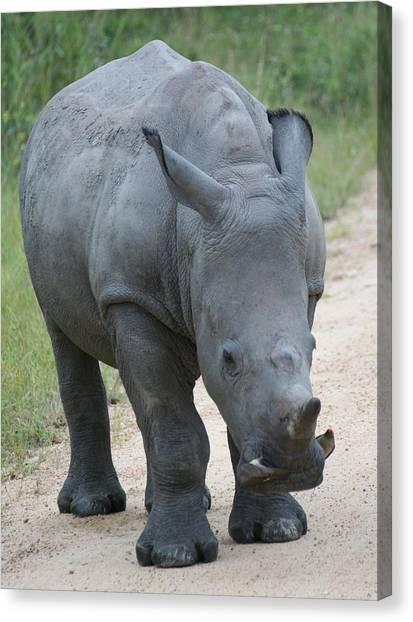 African Rhino Canvas Print