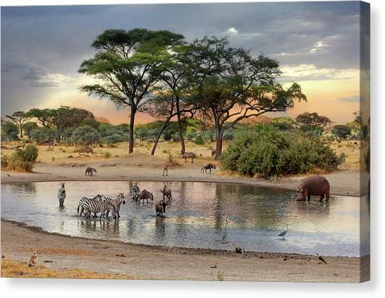 African Safari Wildlife At The Waterhole Canvas Print