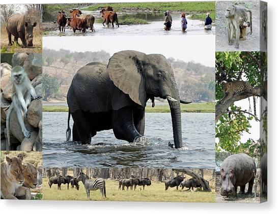 African Wildlife Montage - Elephant Canvas Print