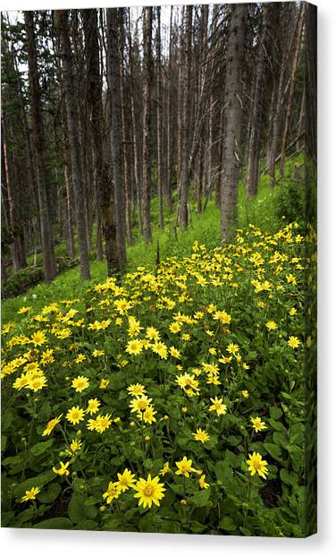 Uinta Canvas Print - After by Chad Dutson