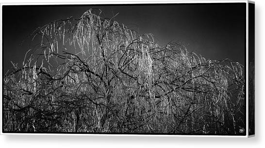 After The Ice Storm Canvas Print