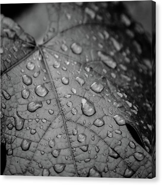 After The Rain #2 Canvas Print