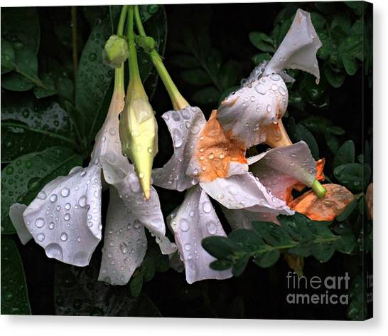 After The Rain - Flower Photography Canvas Print