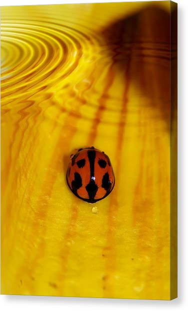Ladybugs Canvas Print - After The Rain by Lesley Smitheringale