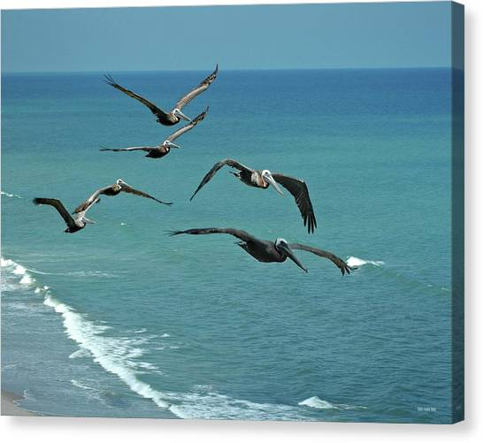 Afternoon Flight Canvas Print by Frank Mari