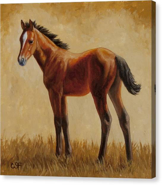 Bay Horse Canvas Print - Afternoon Glow by Crista Forest