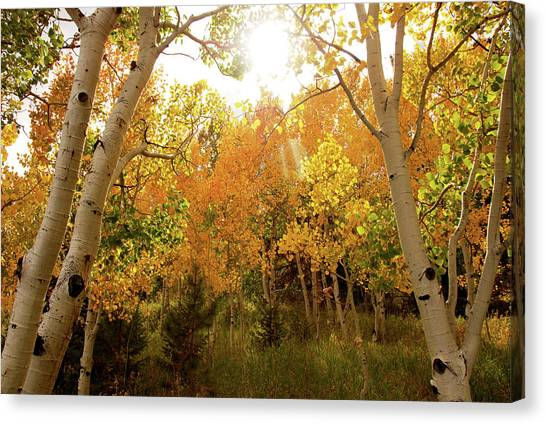 Rocky Mountains Canvas Print - Afternoon In Autumn by Kristin Davidson
