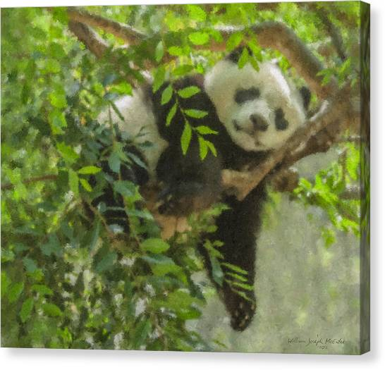 Afternoon Nap Baby Panda Canvas Print
