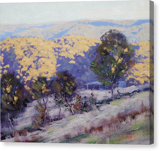 Beautiful Nature Canvas Print - Afternoon  Sunlight Turon Australia by Graham Gercken