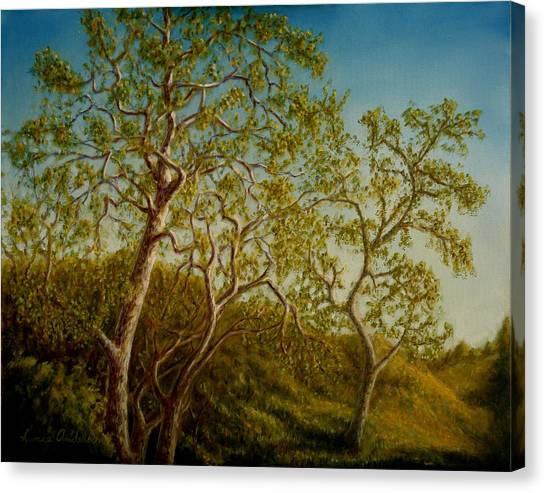Afternoon Sycamores Canvas Print by Lance Anderson