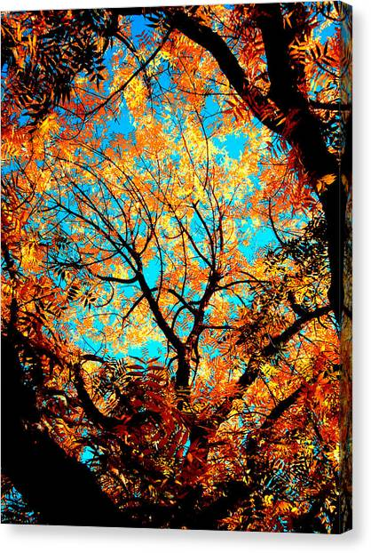Afternoon Canvas Print by Tim Tanis