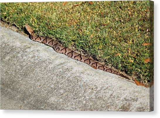 Poisonous Snakes Canvas Print - Afternoon Visitor by Suzanne Gaff